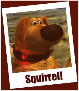Squirrel_Dug