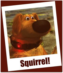 Squirrel_Dug