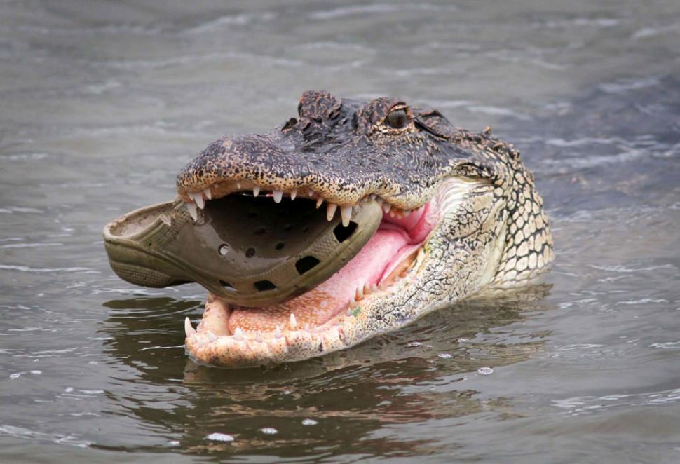 crocodile-croc