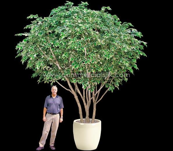 odd-job-silk-tree-designer
