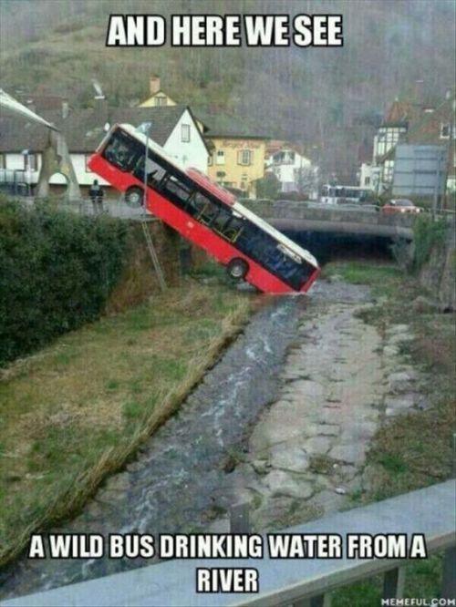 Wild bus