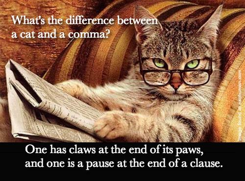 Cat & Grammar