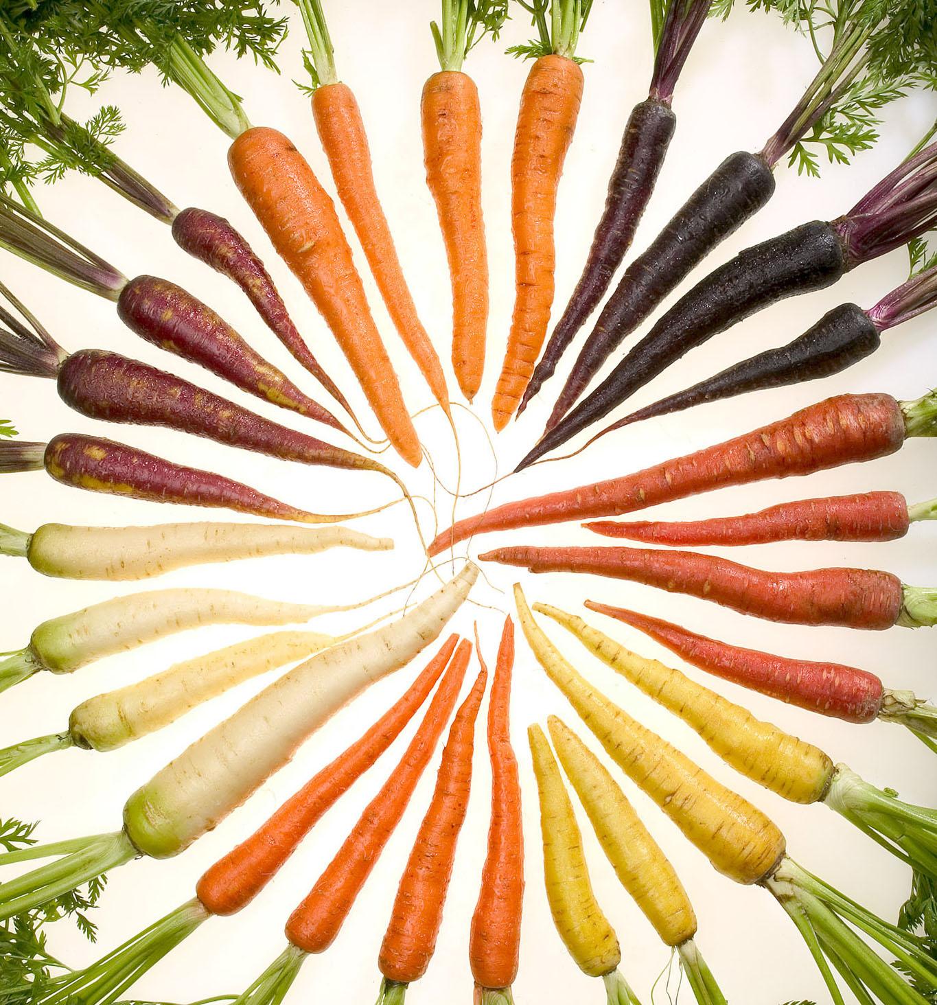 Carrots - Carrot-Museum-co-uk