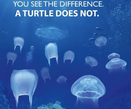 Turtles and Plastic Bags
